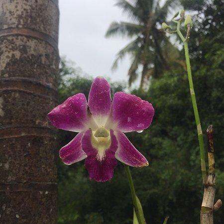 Bali au Naturel: photo1.jpg