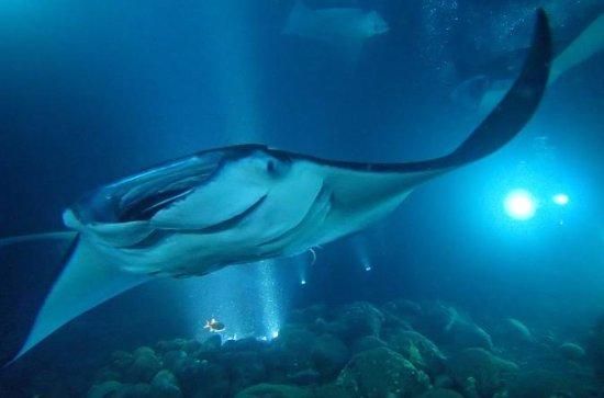 Tour de noche de snorkel en Manta Ray...