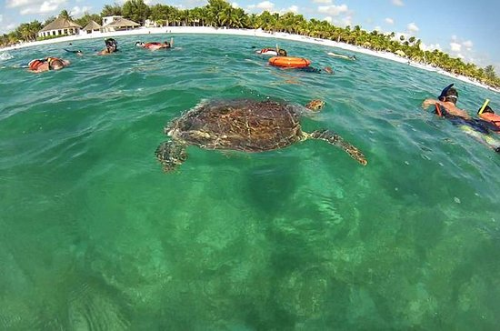 PRIVATE TOUR to Akumal Bay Sea Turtle...