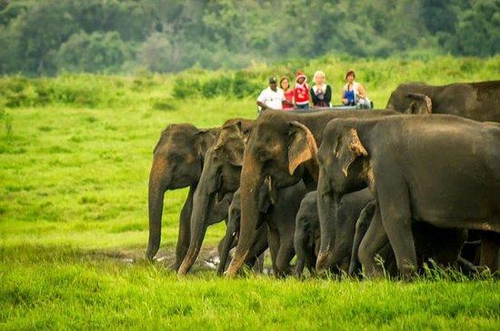 Parque Nacional de Udawalawe Safari...