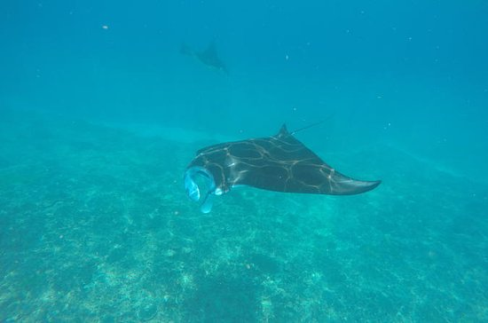 Discover Scuba Diving in Nusa Penida...