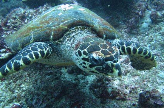 Snorkelling in Padang Bai