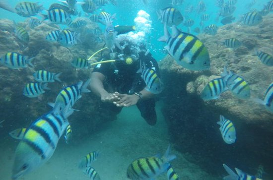 Discover Scuba Diving ( beginners) Combined With Jet Ski