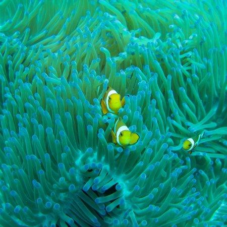 Euro Dive Bali: photo3.jpg