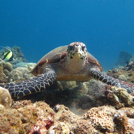 Euro Dive Bali: photo4.jpg