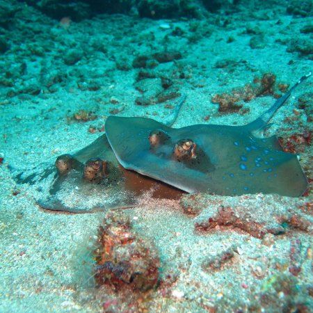 Euro Dive Bali: photo5.jpg