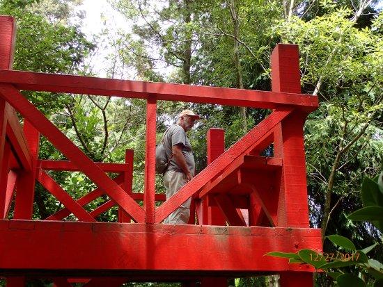Taman Pollard: lookout