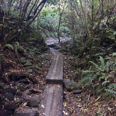 Buller Gorge Swingbridge Ltd: photo2.jpg