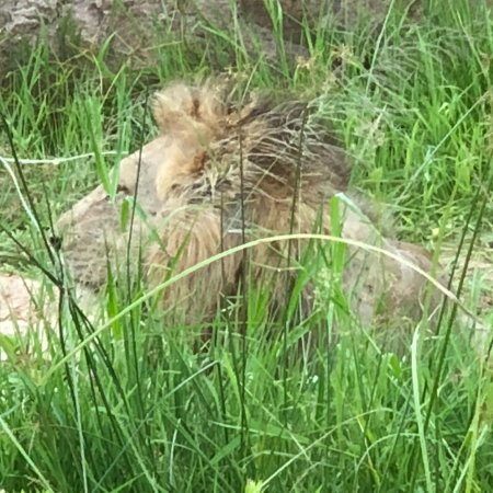 Jock Safari Lodge: photo7.jpg