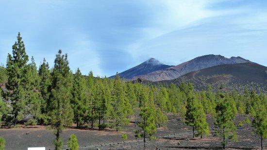 Teide National Park, สเปน: Dennen en zwarte ondergrond