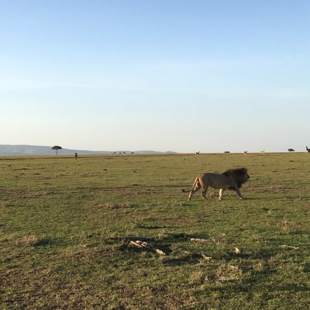 Eagle View, Mara Naboisho: photo3.jpg