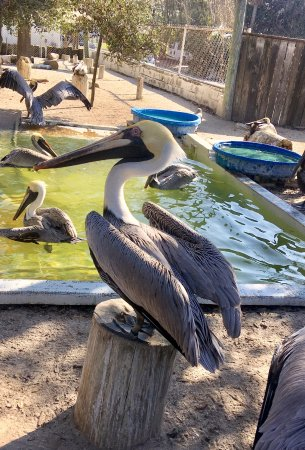 Seaside Seabird Sanctuary: This guy was getting a good seat before the feeding frenzy begins!