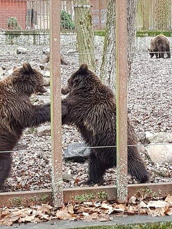 Gradina Zoologica Timisoara Padurea Verde: 20171209_103045_large.jpg