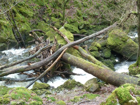 a walk in the woods torrent