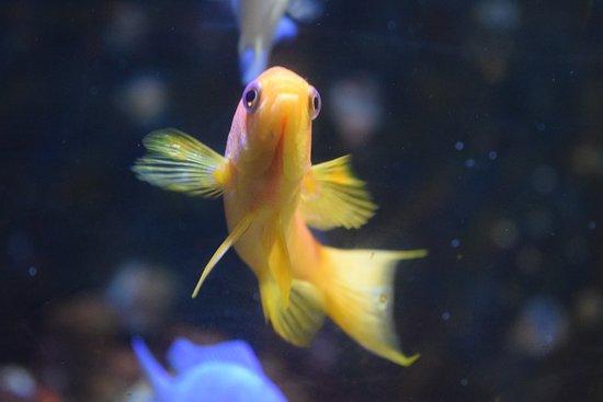 National Sea Life Centre : goldfish