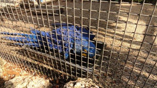 Flamingo Gardens: blue parrot