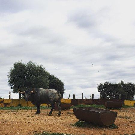 Entre Toros y Caballos: photo2.jpg