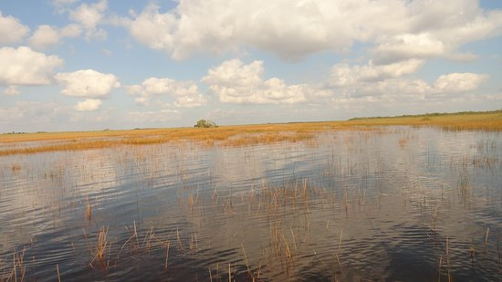 Coopertown Airboats: Everglades swamp in December