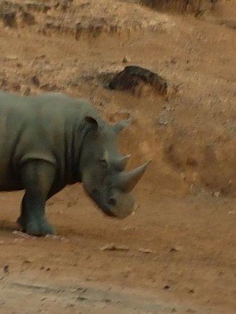 Zoobic Safari: 20171228_172150_large.jpg