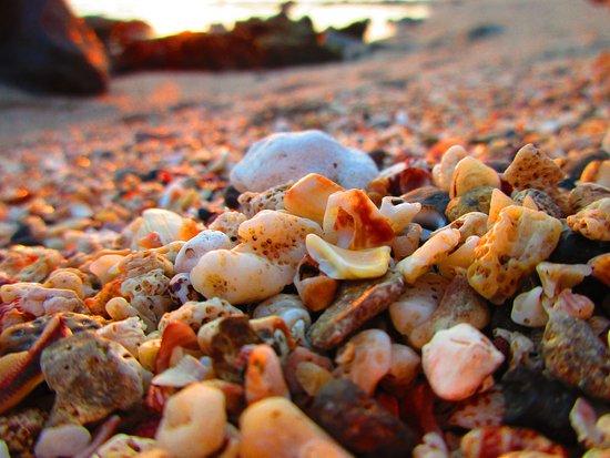 Sandy beach Los Cobanos, El Salvador. Casa Coral