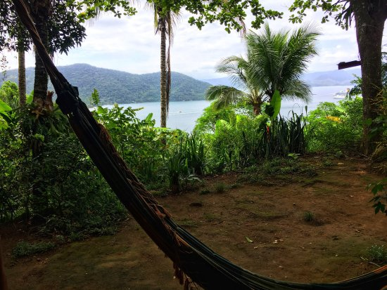 Jungle Lodge : photo2.jpg