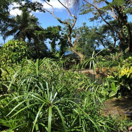 Photo de jardin botanique de deshaies - Jardin botanique guadeloupe basse terre ...