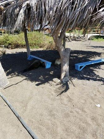 Playa Negra: 20171222_141334_large.jpg