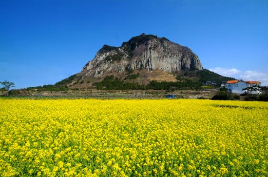 Full-Day Jeju West Coast Bus Tour med...
