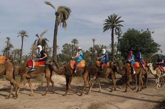 Camel Trek in Marrakech