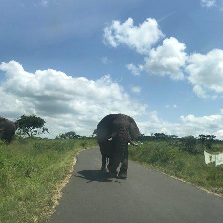 Zululand, Zuid-Afrika: photo0.jpg