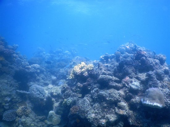 Clown fish nemo bild von cairns dive centre cairns - Deep blue dive centre ...