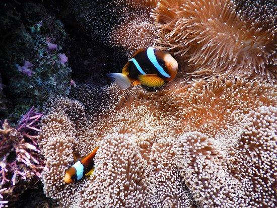 Cairns Dive Centre