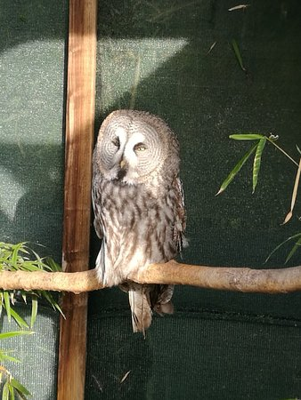 Exmoor Owl & Hawk Centre: IMG_20171229_122103_large.jpg