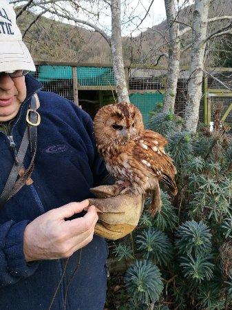 Exmoor Owl & Hawk Centre: IMG_20171229_122310_large.jpg