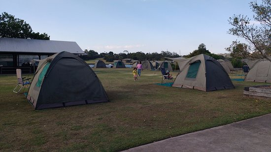 Cockatoo Island Camping: Tent site