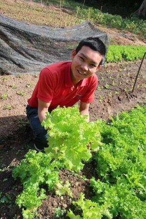 Indigo Farm: The staff cutting organic lettuce to make our lunch