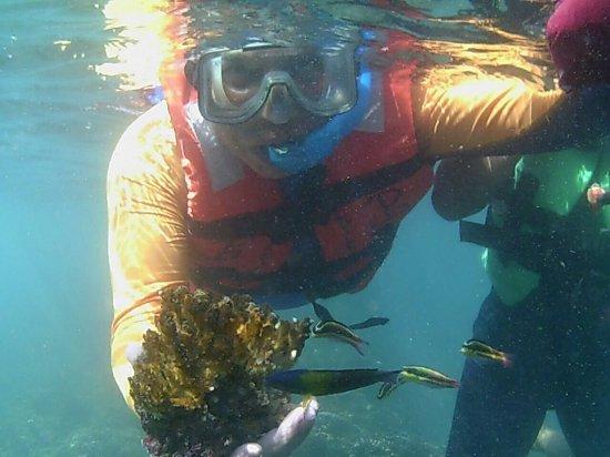 Ixtapa Island (Isla Ixtapa): Con un trozo de coral vivo