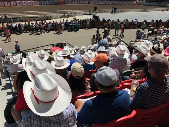 Calgary Stampede  White Stampede cowboy hats dominate the stands in the  outdoor arena 2c173558baf
