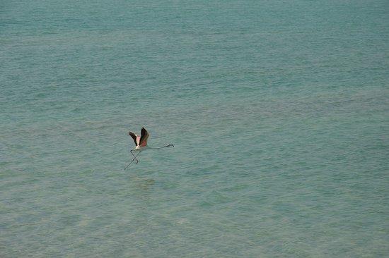Остров Сир-Бани-Яс, ОАЭ: Mangrovia lagoon