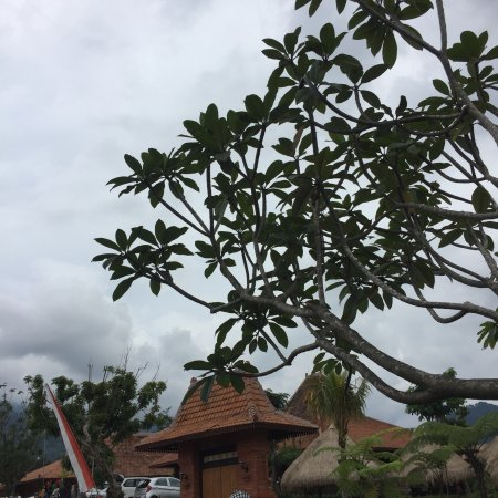 Img20171120122651 Large Jpg Picture Of Bali Ndeso Resto