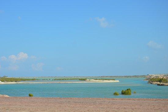 Остров Сир-Бани-Яс, ОАЭ: lagoon with mangrovia trees