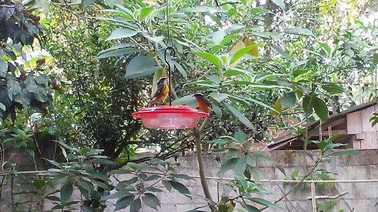 Cabanas Armonia y Jardin de Orquideas: 20171228_083055_large.jpg
