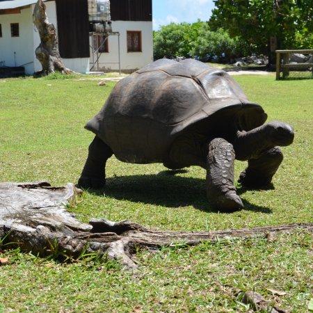Curieuse Island: photo0.jpg