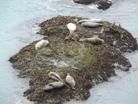 Mendocino Coast: Incontri frequenti nei mesi invernali