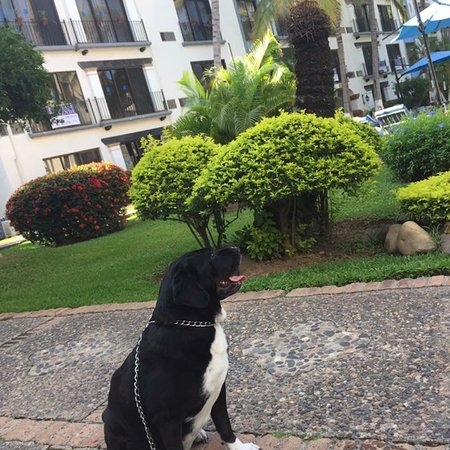 Puerto de Luna Pet Friendly and Family Suites: photo0.jpg