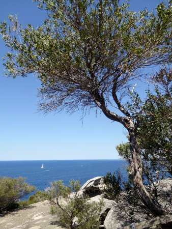 North Head Sanctuary: View from trail