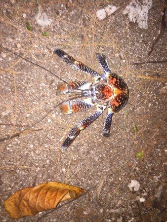 Tikehau Ninamu Resort: Wildlife :)