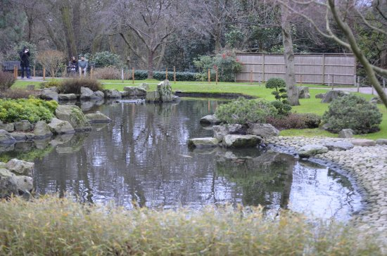Laghetto Con Cascata Da Giardino : Cascata giardino kyoto garden foto di holland park londra