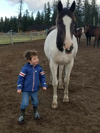 Jesmond, Canada: Levi and Jen. The horses are so happy and gentle!