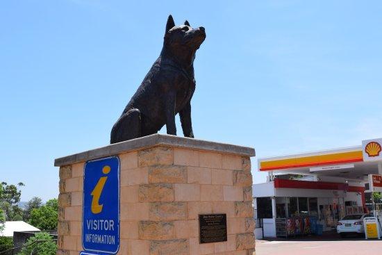 Muswellbrook, Australien: The Big Blue Heeler dog statue